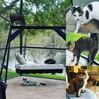 Image of cats indoors and outdoors.