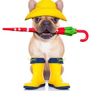 Image: Dog with umbrella.