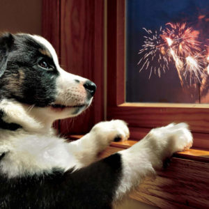 Image: dog watching fireworks through window.