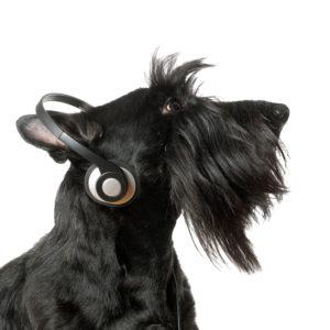 Image: dog with headphones.
