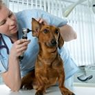 Image: Vet Visit Savanna Westwood - Owner at The Savvy Sitter in Winter Garden Florida