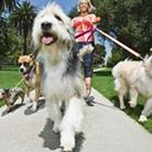 Image:A Waggin' Good Walk Savanna Westwood - Owner at The Savvy Sitter in Winter Garden Florida