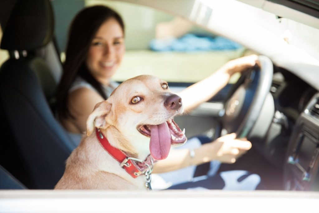 Image: Pet Taxi Savanna Westwood - Owner at The Savvy Sitter in Winter Garden Florida