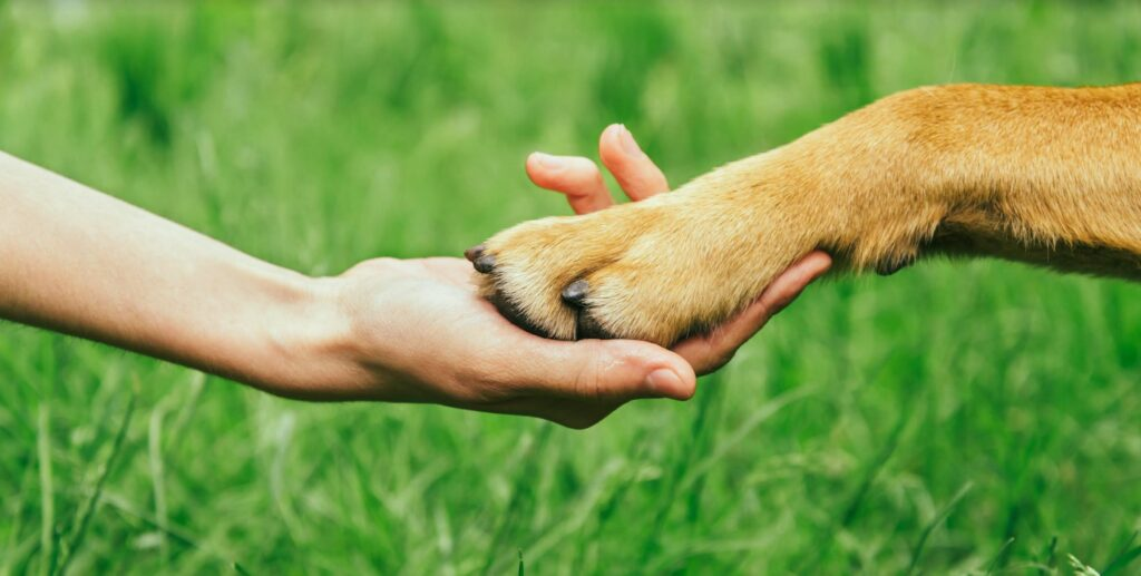 Pet owner and pet paw to hand bond