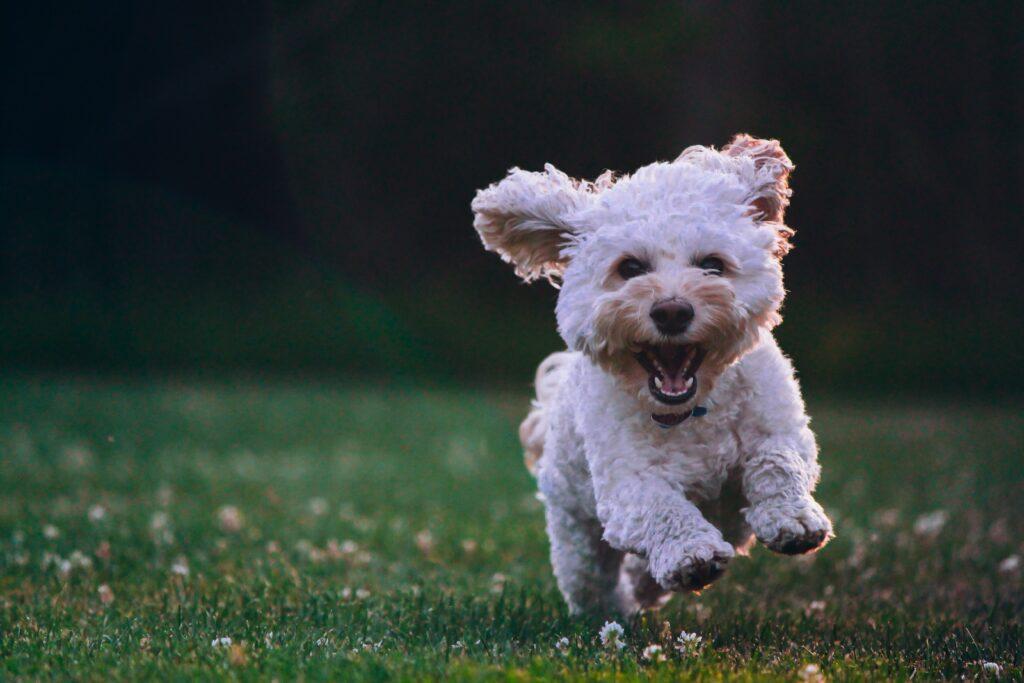 Active puppy